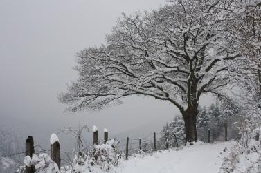 chene-en-hiver.jpg